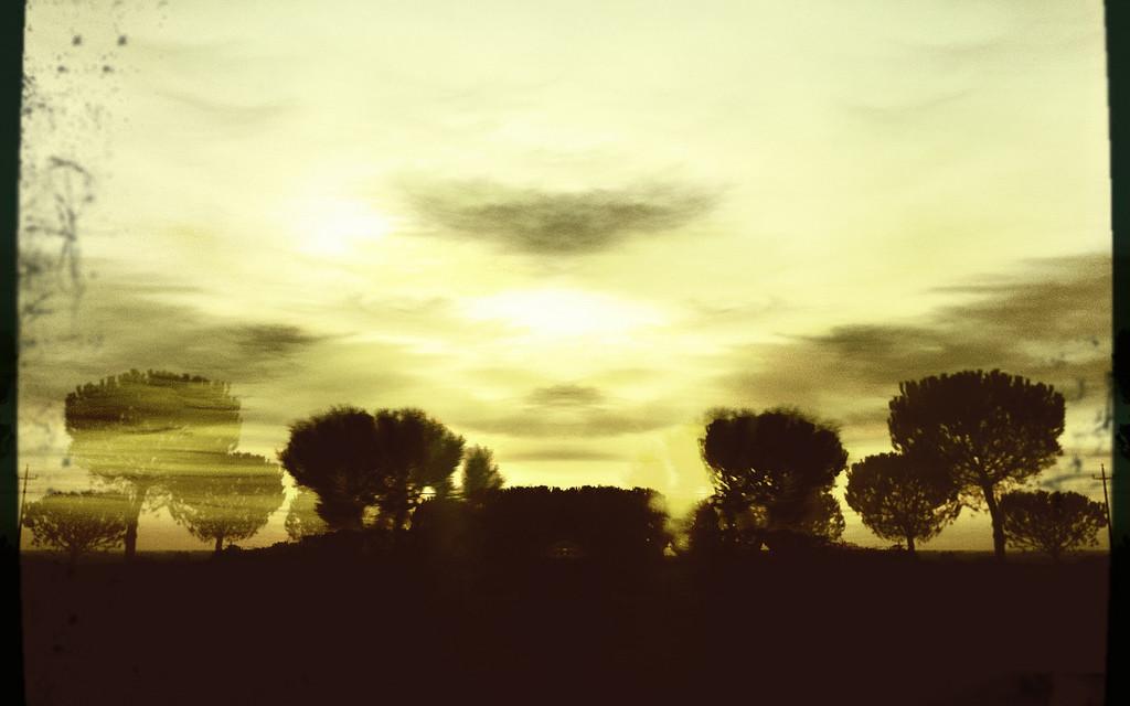 Alberi tramontanti